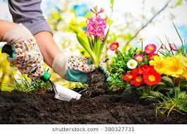 Safe Gardening Segment on CTV
